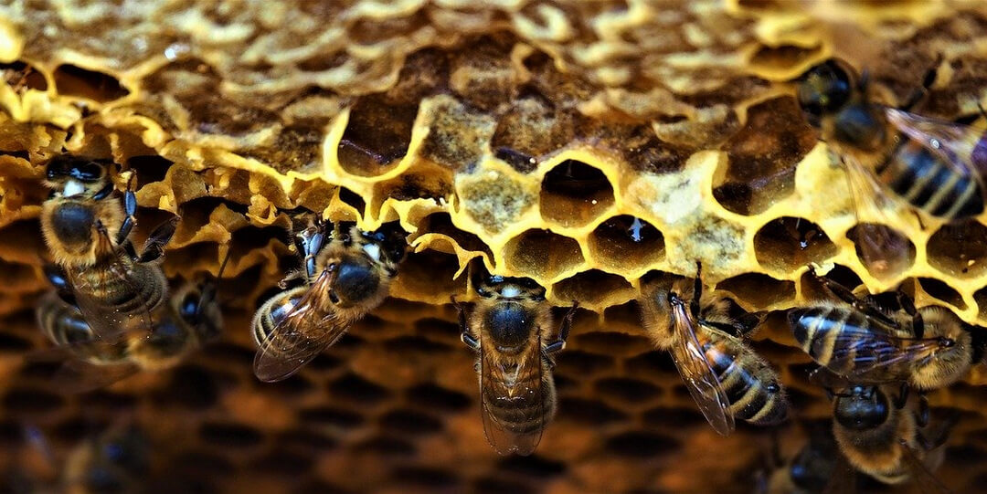 Méhviasz - méhek