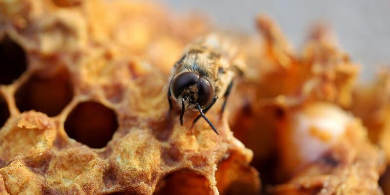 Méhviasz felhasználása – mire jó a természet csodája?