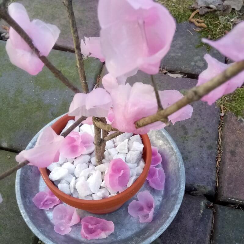 Elkészült az anyák napi virágzó cseresznyefa